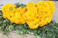 Tuta Hua Dil Aur Phoolon Ka Guldasta Kuch Aur Deta Toh Zaroor Phasta by firoze shakir photographerno1