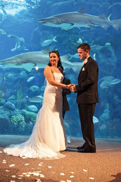 17 Best images about Under the Sea on Pinterest   Wedding