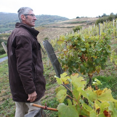 Bruno Perraud looking at his chardonnay vines
