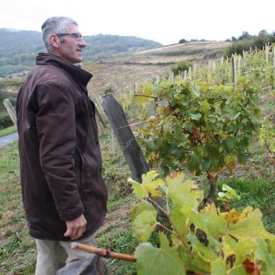 Bruno Perraud looking at his chardonnay vines