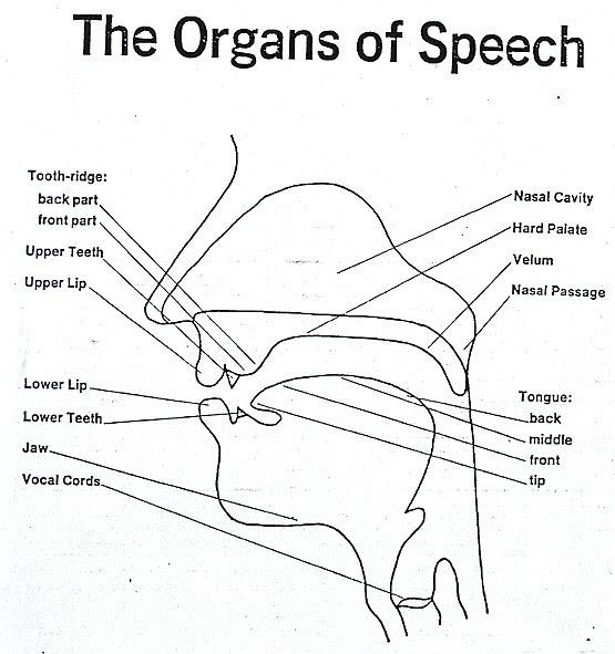 Copy of organs