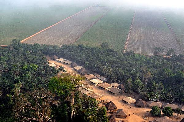 Foto aérea de las tierras ocupadas por Addax Bioenergy para sus plantaciones de caña de azúcar en Sierra Leona. (Foto: Le Temps)