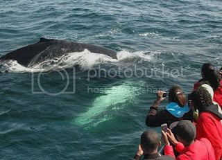 Best Places to Whale Watch in New England