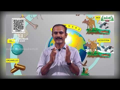 11th Bio Botany உயிரி உலகம் அலகு 1 Kalvi TV