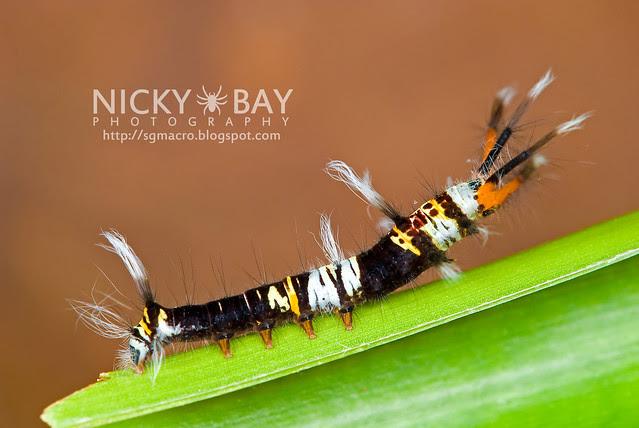 Caterpillar - DSC_8054