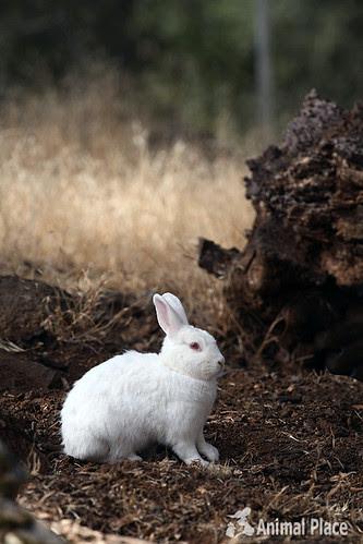 Holly the rabbit