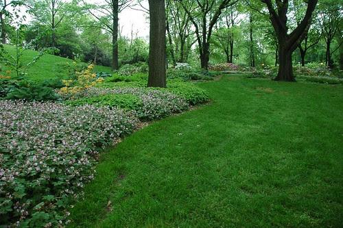 Shade gardens, Osborne Garden, BBG