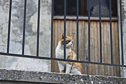 gatti di montagna