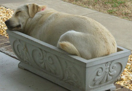 http://thebarkpost.com/30-dogs-awkwardly-sleeping/dog-in-flowerbed-img_assist_custom/