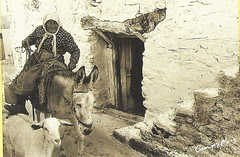 riding a donkey george meis