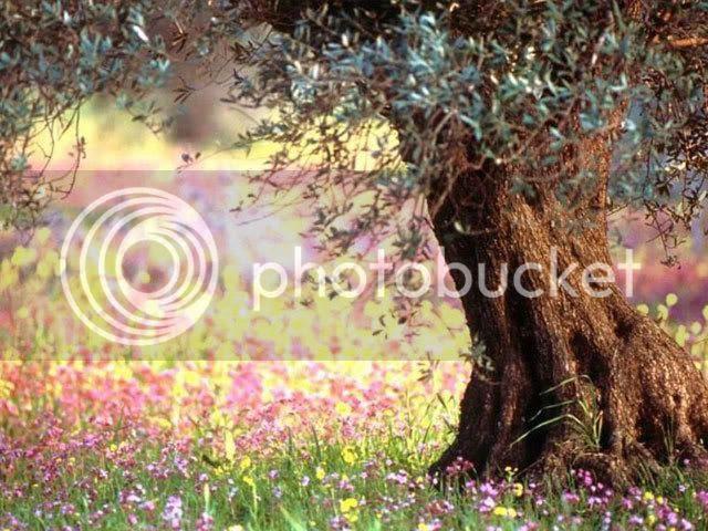 spring flowers photo: FLOWERS Spring.jpg