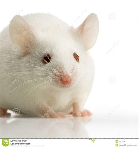 White Mouse Royalty Free Stock Photos   Image: 2331178