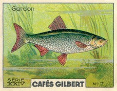 gilbert rivière 7