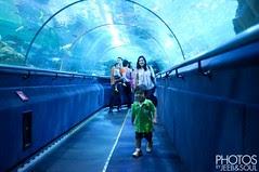 Trip to Aquaria 2013