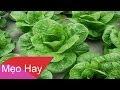 Mẹo Gia Đình Mẹo Nấu Nướng: 5 loại rau phun nhiều thuốc nhất