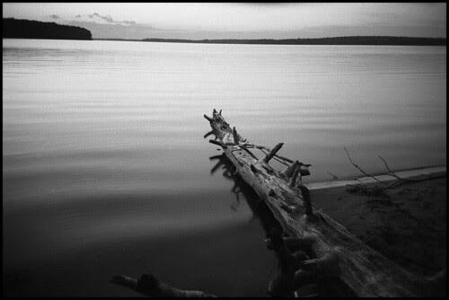 Douglas Lake evening