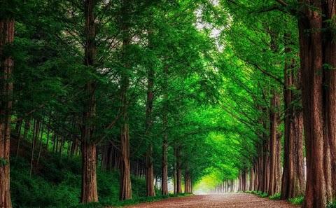 اهمية الشجر في الحياة