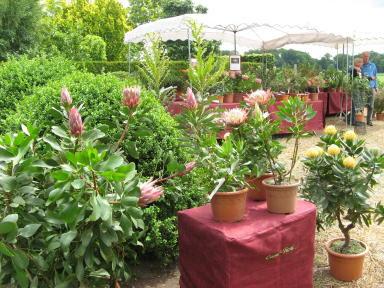 Gartentage Schwieters 2012