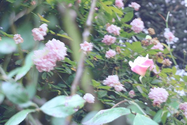 photo autumn15_zps0f9b065e.jpg