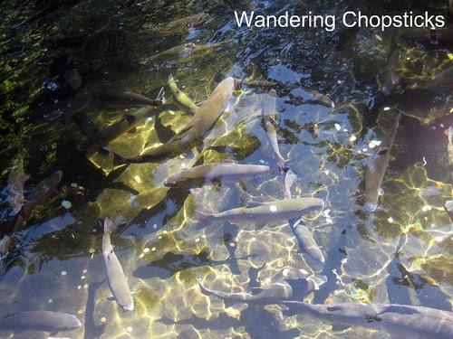 Day 4.2 Bonneville Hatchery - Cascade Locks - Oregon 7