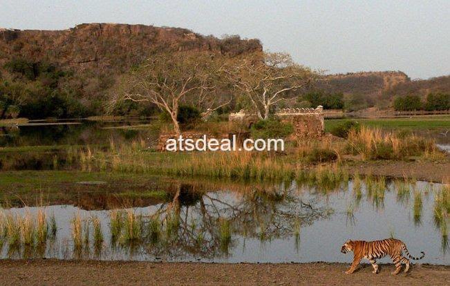 Ranthambhore Tiger park Rajasthan
