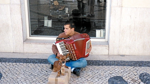 Singing Chihuahua - Lisbon, Portugal