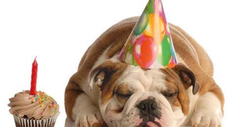English Bulldog Wedding Cake Ideas and Designs