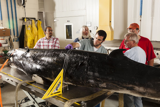 Avatar of How a CT Scanner for Rockets Could Help Scientists Protect Whales From Noise Pollution