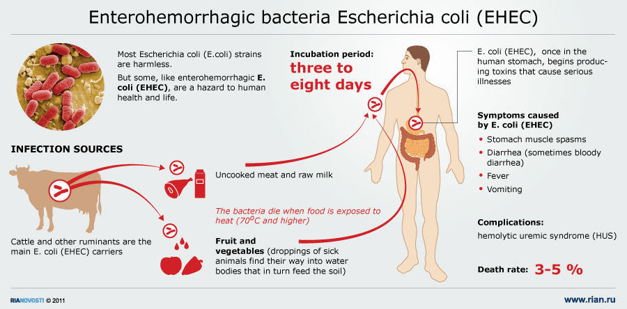 Dangerous enterohemorrhagic bacteria E. coli