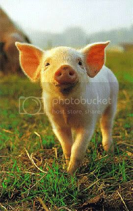 piglet Pictures, Images and Photos