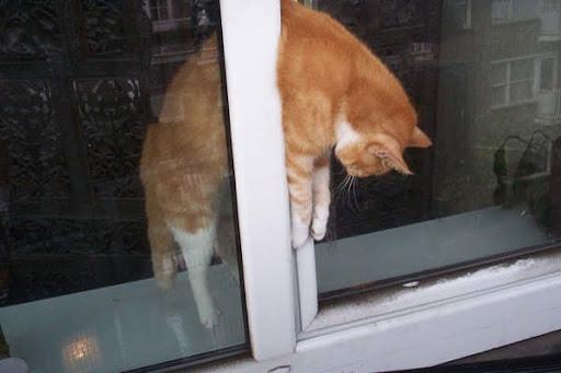 """Résultat de recherche d'images pour """"photo chat pris dans un étau"""""""