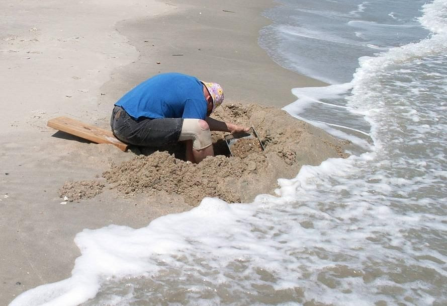Dig The Beach Tour