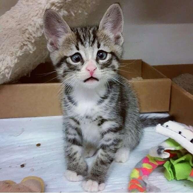 Foto: worried_cat_aka_bum