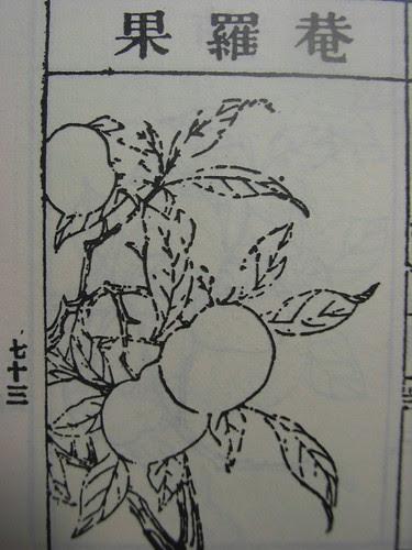 庵羅果(圖)