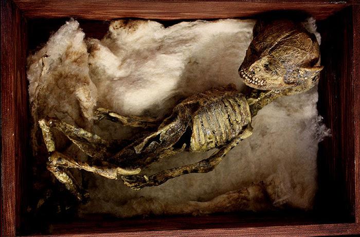 skulls-skeletons-thomas-theodore-merlin-home-london13