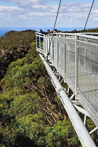 Illawarra Fly Tree Top Walk, Knights Hill, New South Wales, Australia IMG_4524_Illawarra_Fly