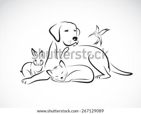 Pet Health Insurance coverage & Wellness | My Mi40