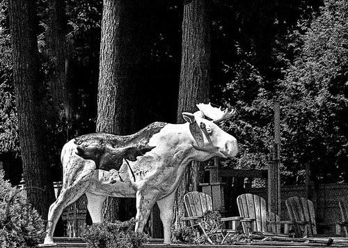 Orillia - Great Canadian Moose