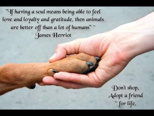 Great Quotes Dog Lovers - Wisdom Line y