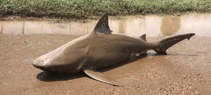 Σάρωσε ο τυφώνας «Nτέμπι» την Αυστραλία -Καρχαρίας ξεβράστηκε στον δρόμο [εικόνες]