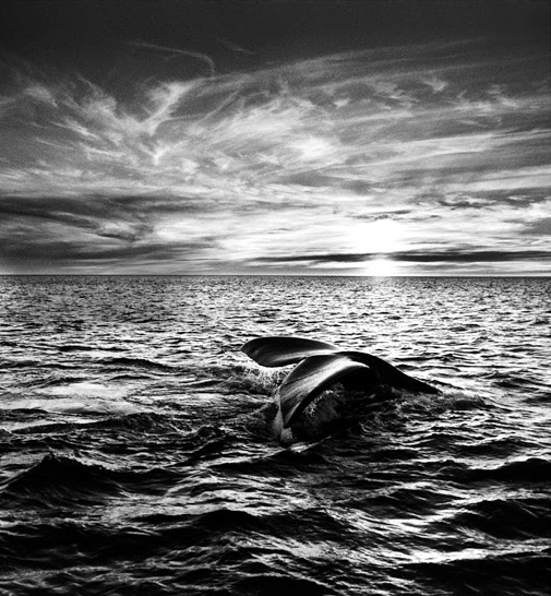 http://domeupontodevista.files.wordpress.com/2010/02/sebastiao-salgado-2.jpg