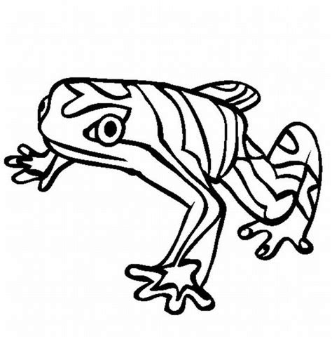 rainforest animal coloring pages getcoloringpagescom