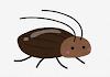 生きている ゴキブリ 寝室 見失った x9nd68