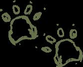 empreintes d'ours