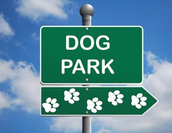 Parques caninos: ¿Realmente son buenos para nuestros perros?