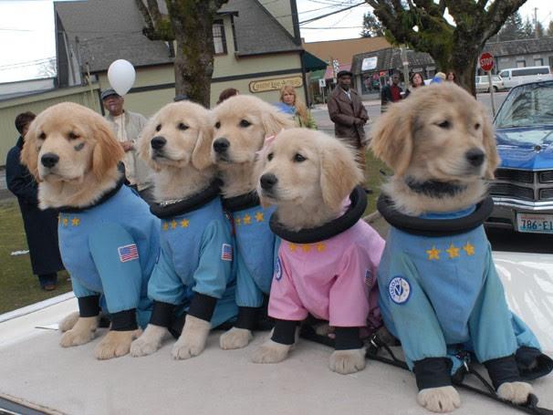 Filhotinhos embarcam em mais uma aventura, desta vez no espaço (Foto: Divulgação / Reprodução)