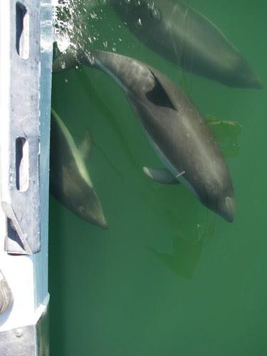 bow dolphins near Pio