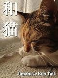 和猫〜Japanese Bob Tail