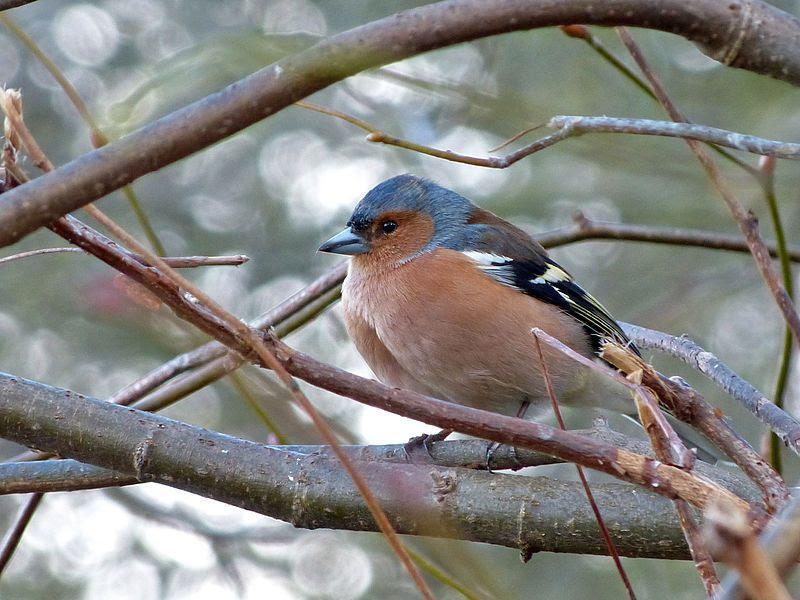 En Images Apprenez  Reconnatre Les Oiseaux Des Jardins