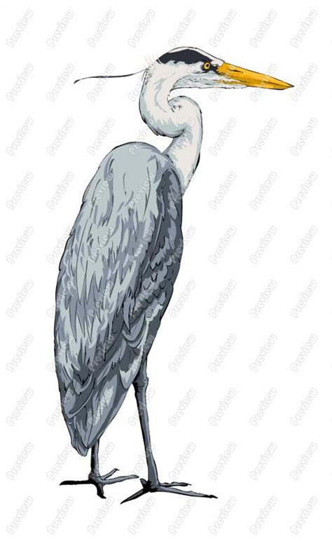 great egret clipart clipground